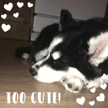 Photo uploaded to Nylabone Dura Chew Bone Dog Toy by Julie S.