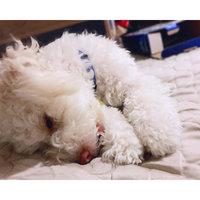 SmartBones® Mini Chews Dog Treat - Peanut Butter size: 32 Count uploaded by Uuganzaya M.