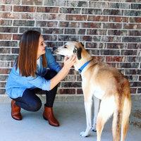 Royal Canin® Labrador Retriever Adult Dog Food 30 lb. Bag uploaded by Ashley P.