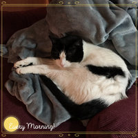 Friskies® Rise & Shine Adult Cat Food uploaded by Shanna B.