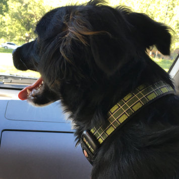 Photo of KONGA Comfort Dog Collar uploaded by Anne A.