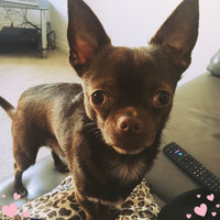 Royal CaninA Chihuahua 28TM Adult Dog Food uploaded by Chrissie H.