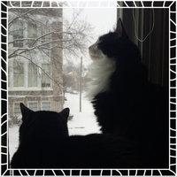 PetSmart uploaded by Sam S.
