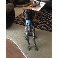 KONG Bounzer Dog Toy Medium uploaded by Katlynn K.