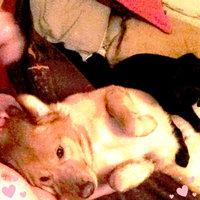 Sporty K9 NBA Dog Collar uploaded by Stevey M.