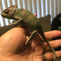 Planet Petco Small Animal Hideaway, 4.75