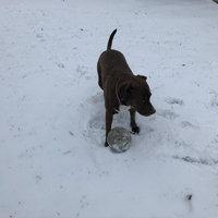 Pedigree® Adult Complete Nutrition Dry Dog Food 50 lb. Bag uploaded by Abi W.