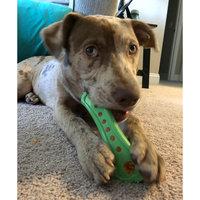 Hartz Tiny Dog Dental Duo Dog Toy Edible Chew Combo (Set of 3) uploaded by Bethany O.