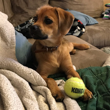 Photo of KONG AirDog Squeaker Tennis Ball uploaded by Eden R.