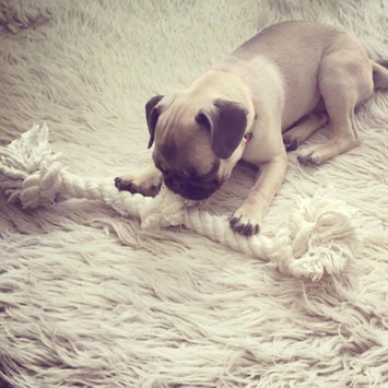 Photo of Mammoth Flossy Chews 100-Percent Cotton White 3-Knot Rope Tug uploaded by Ann K.