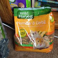 Wild Harvest Hamster & Gerbil Advanced Nutrition Diet, 4 lb uploaded by Alysha L.