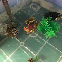 Petsmart Water Wisteria size: 8 in, Green uploaded by Angelina r.