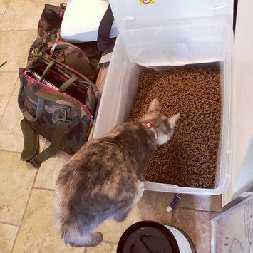 Photo of Iams™ Proactive Health™ Healthy Kitten Cat Food uploaded by Ashley O.