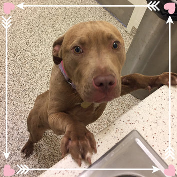 Photo of Humane Society  of the United States uploaded by Sophie F.