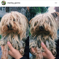 WAHL Four In One Lavender Chamomile Pet Shampoo & Conditioner, 24 oz uploaded by Nicole Z.