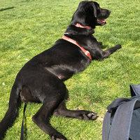 Royal Canin Breed Health Nutrition Labrador Retriever Adult Dry Dog Food 5.5 lb. Bag uploaded by Fabiola N.