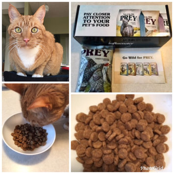 Photo of Taste of the Wild PREY Turkey Formula for Cats uploaded by Monica C.