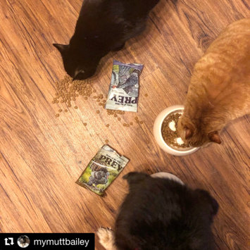 Photo of Taste of the Wild PREY Turkey Formula for Cats uploaded by Jacklyn T.