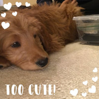 PetSmartA 2014 Puppy Starter Kit uploaded by Elyssa H.