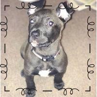 Pedigree® Puppy Targeted Nutrition Dry Dog Food uploaded by jillian🍯 J.
