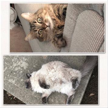 Photo of Friskies® Party Mix Cat Treats Original Crunch Chicken Liver & Turkey uploaded by C. H.