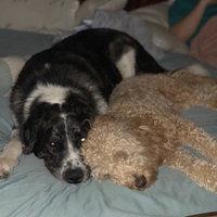 KONG Zoom Groom Dog Brush  uploaded by Lauren E.