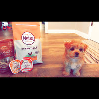 Nutro Ultra NUTROA ULTRATM Small Breed Puppy Food uploaded by Kasalyn S.