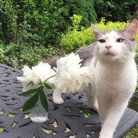 Whiskas Temptations  Cat Treats uploaded by Kris K.