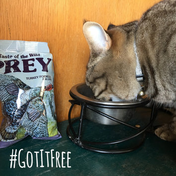 Photo of Taste of the Wild PREY Turkey Formula for Cats uploaded by Amanda S.