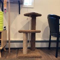 Pet Smart Pet Pals Eco Friendly Doubble Nesting Cat Condo uploaded by Lana N.