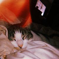 Whiskas® Temptations® Tasty Chicken Flavor Treats for Cats 1.7 oz uploaded by McKenna R.