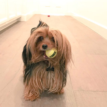 Photo of KONG AirDog Squeaker Tennis Ball uploaded by Joanna S.