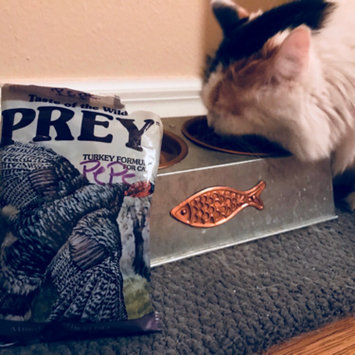 Photo of Taste of the Wild PREY Turkey Formula for Cats uploaded by Samantha C.