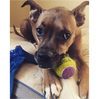 KONG AirDog Squeaker Tennis Ball uploaded by Sierra T.