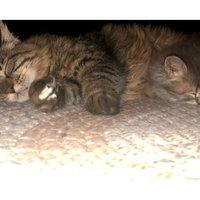 Breeze Cat Litter System uploaded by Jamie D.