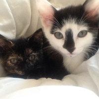 Whiskas WHISKASA Savory Pate Cat Food uploaded by Savanna F.