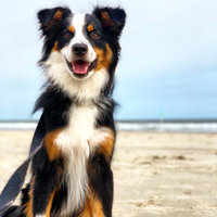 Greenies Dog Dental Chew Treats Regular 27oz 27ct uploaded by Katie B.