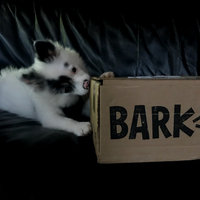 BarkBox uploaded by Lauren M.