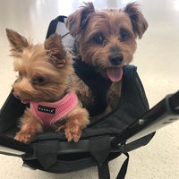 Snoozer Wheel Around 4-In-1 Pet Travel Carrier uploaded by Phi A.