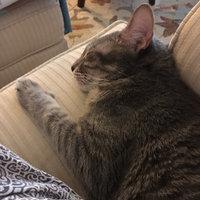 TEMPTATIONS™ Classic Treats For Cats Tasty Chicken Cat Treats uploaded by Jennifer D.