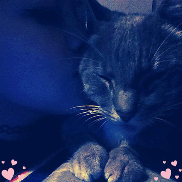 Photo of Purina Kitten Chow PurinaA Kitten ChowA Nurture Kitten Food uploaded by 💗🌸박지민🌸💗 H.