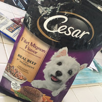 CESAR® Dry Filet Mignon Flavor with Spring Vegetables - Dry Dog Food uploaded by Kerri D.