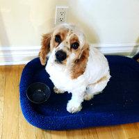 PetSmartA 2014 Puppy Starter Kit uploaded by member-bf9a7
