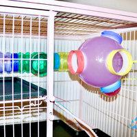 Super Pet FerreTrail Fun-nels Tube Maze, Colors Vary uploaded by Zero T.
