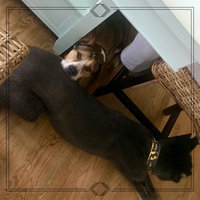 Iams™ Proactive Health™ Adult Minichunks Dog Food uploaded by Whitney J.