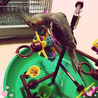 Super Pet Feathered Friends Desktop Activity Center uploaded by Melissa F.