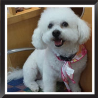 Freshpet® SELECT CHUNKY BEEF WITH VEGETABLES & BROWN RICE DOG FOOD RECIPE uploaded by Sherry C.