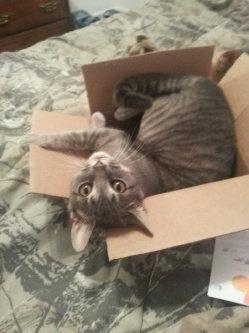 Photo of Pounce Cat Treats uploaded by Ashlyn W.