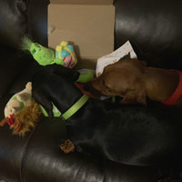 BarkBox uploaded by Heather O.
