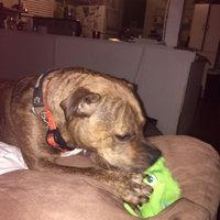 BarkBox uploaded by Kayla J.